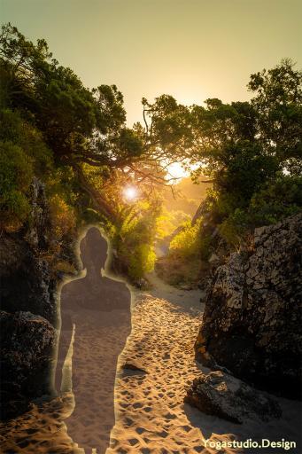 Buddha Lotus Sunset Forest Light