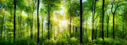 Waldpanorama Lichtmotiv